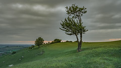 lone tree with re photography2 a7iii (gaztotalmods) Tags: