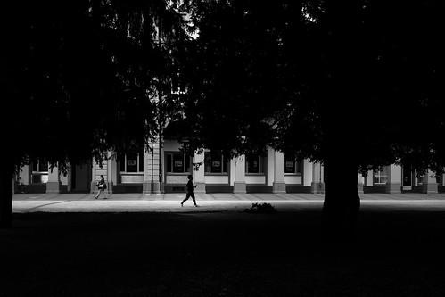 beneath trees