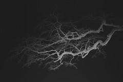 """from the series """"postcards from the emptiness"""" (Mindaugas Buivydas) Tags: postcardsfromtheemptiness lietuva lithuania bw spring march memelland priekule priekulė tree trees whiteinblack dark darkness mindaugasbuivydas"""