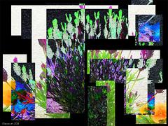 Garden Wall (Lemon~art) Tags: wall garden lavender pansy geometric manipulation flower iphonecamera