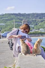 A7R3__DSC3864_C1 (Bazoka+Cynthia) Tags: cat 南城市 奧武島 小婆 日本 沖縄県 貓