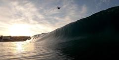 birds eye view (davidweedallphotography) Tags: beach beaches beachphotography beachlife epic earth nature naturephotography nationalgeographic natgeoyourshot nature'sbest naturallight water waterphotography waves wavephotography waterandlight waterscapes ocean oceanphotography outside outdoors oceanlover surfing sunrise sun sunrisephotography sea seascape surf surfingphotography california californiaphotography colors clouds californiasunrise's gopro goprophotography