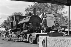 Wolsztyn PKP     2019 (keithwilde152) Tags: beyer peacock nr1827 wolsztyn xxvi parade wielkopolska pkp poland 2019 low loader transport operatives people steam locomotives outdoor summer