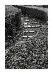 Steps in the park (K.Pihl) Tags: olympusom1 cobblestones film blackwhite schwarzweiss pellicolaanalogica park bw kodaktmax400 analog monochrome