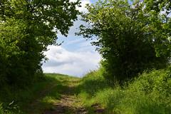 Le chemin vers les nuages (Croc'odile67) Tags: nikon d3300 sigma contemporary 18200dcoshsmc paysage landscape campagne chemin ciel cloud sky nature nuage arbres trees