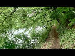 ViaRhenana 18 (Beat09) Tags: schweiz switzerland suisse natur nature viarhenana rhein rhine rheinufer weg path green grün hdr vividhdr