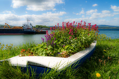 Flower power (Gullivers adventures) Tags: flowers boats green ireland country sailing ship sea ocean sky clouds fun dandelion wood