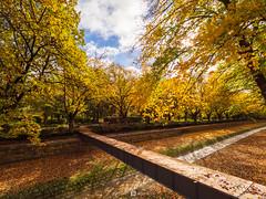 Bendigo Creek Beam (Joel Bramley) Tags: bendigo creek water trees nature autumn landscape yellow leaves stone australia victoria