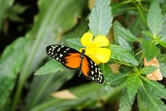 Vacances_0904 (Joanbrebo) Tags: mainau konstanz badenwürttemberg de deutschland canoneos80d eosd autofocus papallona papillon farfalle mariposa butterfly