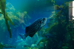 RJB_7701.jpg (Snoop Baggie Bag) Tags: california montereyaquarium 2019 holiday monterey