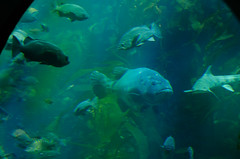 RJB_7706.jpg (Snoop Baggie Bag) Tags: california montereyaquarium 2019 holiday monterey