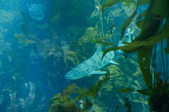 RJB_7712.jpg (Snoop Baggie Bag) Tags: california montereyaquarium 2019 holiday monterey