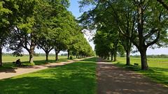 Falkenluster Allee (1elf12) Tags: allee alley weg falkenlusterallee welterbe unesco brühl germany deutschland bäume trees