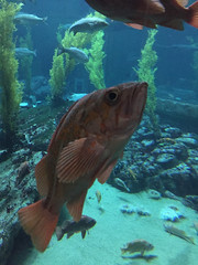 IMG_5305.jpg (Snoop Baggie Bag) Tags: california montereyaquarium 2019 holiday monterey pacificgrove unitedstatesofamerica