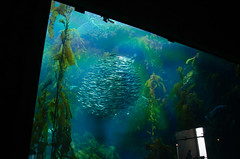 RJB_7694.jpg (Snoop Baggie Bag) Tags: california montereyaquarium 2019 holiday monterey