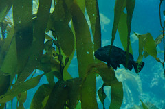 RJB_7711.jpg (Snoop Baggie Bag) Tags: california montereyaquarium 2019 holiday monterey