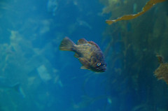 RJB_7844.jpg (Snoop Baggie Bag) Tags: california montereyaquarium 2019 holiday monterey