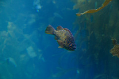 RJB_7845.jpg (Snoop Baggie Bag) Tags: california montereyaquarium 2019 holiday monterey