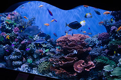 RJB_7852.jpg (Snoop Baggie Bag) Tags: california montereyaquarium 2019 holiday monterey