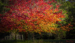 Late Autumn colours (Julie Holland photography) Tags: autumn trees colour orange red landscape canoneos5dmarkiii