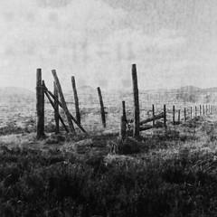 Eddy Grave Stake (Mark Rowell) Tags: lakedistrict cumbria eddygravestake uk 6x6 120 mediumformat ilford delta expired blackandwhite bw film rolleiflex
