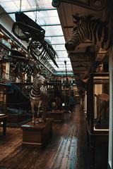 Roadtrip in Ireland (Fla(v)ie) Tags: ireland roadtrip travel irelande voyage musée museum dublin naturalhistorymuseum animals wood interior muséumdhistoirenaturelle