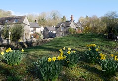 The Hamlet of Milldale in spring (lesleydugmore) Tags: uk england europe britain outdoor grass green daffodils yellow staffordshire milldale sky blue houses village stone wall drystonewall peaknationalpark hamlet rural serene countryside picturesque roof window chimneys buliding architecture