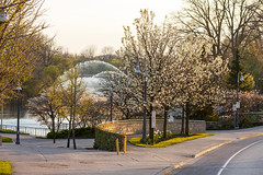 Spring at Ivey Park (Brad_McKay) Tags: ifttt 500px spring sunset city urban flowers tree bloom budding water street sidewalk nature