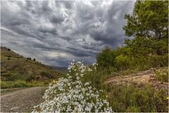 Flores en la cuneta (Fernando Forniés Gracia) Tags: españa aragón zaragoza flores nubes camino paisaje landscape naturaleza