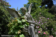 Statue of Angel in St Pancras and Islington cemetery (vbadwolf) Tags: islington stpancras pancras st london cemetery cemeteries gothic goth graveyard gravestone gravestones headstone headstones woodland wood woods statue statues angel angels