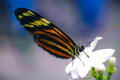 Pacific Science Center's Tropical Butterfly House (Graham Gibson) Tags: seattle 2019 pacific science center's tropical butterfly house