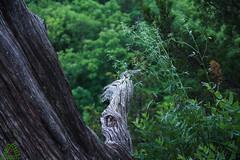 IMG_2853 (derren.dettloff) Tags: haha ha tonka mo mid missouri state park hike river sunday funday