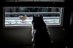 Bird +1, Cat 0 (burnt dirt) Tags: bird dove mourning cat black and white porch patio glass window apartment fujifilm xt2