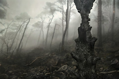 After (PentlandPirate of the North) Tags: fire blaze scorched burnt forest theroaches staffordshire fog mist black ashes