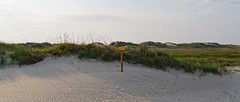On the Dunes (picsessionphotoarts) Tags: panorama beachphotography germany deutschland nikon nikonfotografie nikonphotography festbrennweite afsnikkor35mmf18g primelens nikond850 nordsee stpeterording lazydays northsea onthebeach beach amstrand wattenmeer nature green