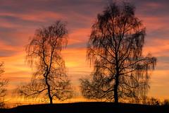 H.Erdinger_3_Abendrot Harburg (2) (Harald Erdinger) Tags: abenddämmerung abendrot harburg landschaft nähesalchhof sonnenuntergang