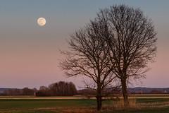 H.Erdinger_1_Mondaufgang (Harald Erdinger) Tags: abenddämmerung abends mondaufgang niederschönenfeld