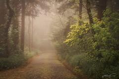 Misty morning (jorgeverdasca) Tags: spring path trees landscape forest woodland nature sintra portugal