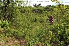 Panoramaweg Perl 2019 35 (60386pixel) Tags: traumschleifepanoramawegperl panoramawegperl saarhunsrücksteig traumschleife naturschutzgebiethammelsberg naturschutzgebiet natur frühling frühjahr frankreich orchidee orchis