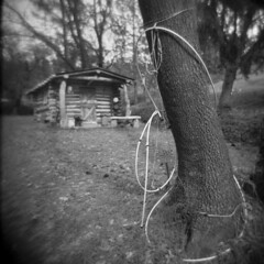 Greenwood #8 (LowerDarnley) Tags: holga ca northernca greenwood logcabin tree irrigation