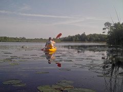 Leah-1 (Pnerissa) Tags: tadpoles nature kayaking freshwater water lily frogs underwater