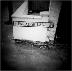 down Paradise lane.... (bevscwelsh) Tags: paradiselane holga120n