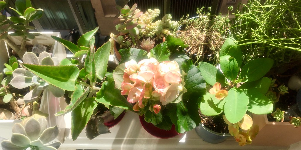 The World S Best Photos Of Balcon And Plantas Flickr Hive Mind