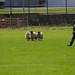 All Ireland Sheep Shearing 2019