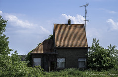 Zeitgeist . . (Eduard van Bergen) Tags: neglected old broken ruine house haus maison abandoned vintage biesbosch brabantse holland polder netherlands niederlande picture photo foto still tv television masts analogue zeitgeist fashion clothing beard man fangio maxverstappen monaco gp ville grandprix f1 1950 2019 time zeit temps past history weird strange continuum place spooky geister ghosts spookhuis haunted field veld