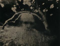 Under The Bodhi Tree (micalngelo) Tags: analog papernegative pinhole pinholephotography 4x5pinhole largeformatpinhole alternativeprocess alternativephotography lithportrait lithprocess lithprint moerschlith lomography lomojunkie toycamera toycameraphotography zeroimage zeroimagepinholecamera
