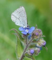 Butterfly lands on flower and looks beautiful. (Lux Aeterna - Eternal Light) Tags: butterfly macro