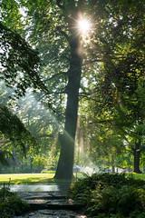 Sonne (KaAuenwasser) Tags: wasser sonne sonnig sonnenstrahlen sonnenschein sonnenstern licht baum bäume buche leuchten belichtung bewässerung pflanzen stadtgartenkarlsruhe garten park anlage weg karlsruhe mai 2019 grün steine stein wiese rasen nebel wassernebel nass farne farn ahorn waldbeet beet holz stämme stamm ruhe lage tag monat zeit entspannung stille morgen blatt blätter ast äste natur