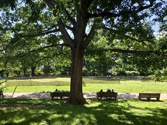 Grand tree and benches, Memorial Day at Meridian Hill Park, Washington, D.C. (Paul McClure DC) Tags: washingtondc districtofcolumbia may2019 park scenery people tree columbiaheights