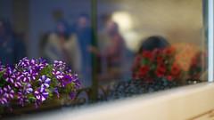 Am I dreaming....? (lebre.jaime) Tags: portugal beira covilhã restaurant flowers reflection glass window digital ff fx fullframe nikon d600 voigtländer nokton 58f14sliis affinity affinityphoto